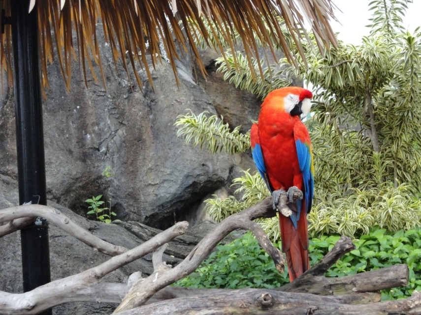 Ada beberapa burung kakaktua yang bisa didekati bahkan berfoto bersama kalau mau