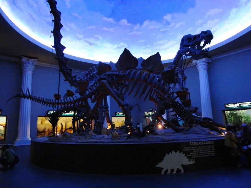 Tyranosaurus dan Stegosaurus. Silahkan membayangkan segede apa mereka pas hidup.