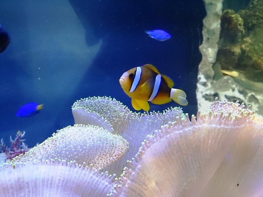 Maaaak! I found Nemo!