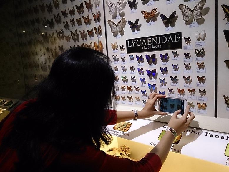 Kupu-kupu banyak sekali