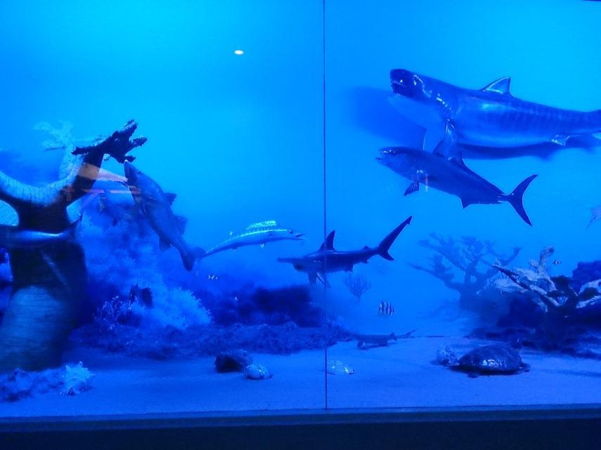 Koleksi Museum Satwa sangat lengkap, termasuk  binatang laut