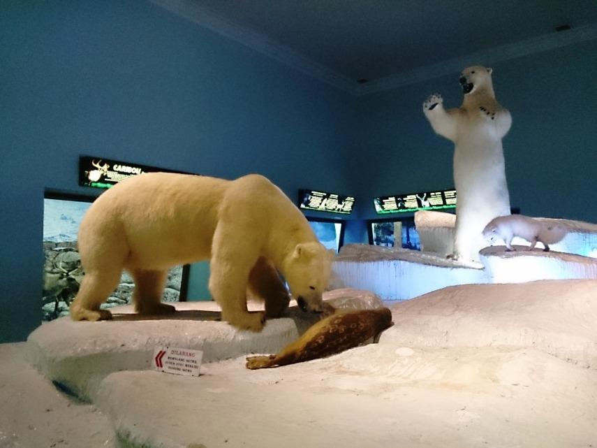 Exhibit beruang kutubnya keren, ada di tengah ruangan