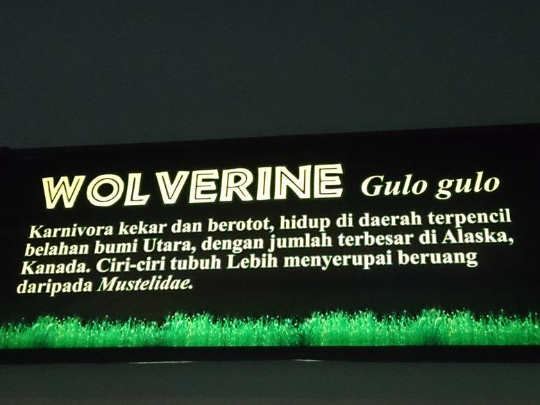 Penampilan boleh sangar, tapi nama asli Wolverine ternyata cupu...hahahaha