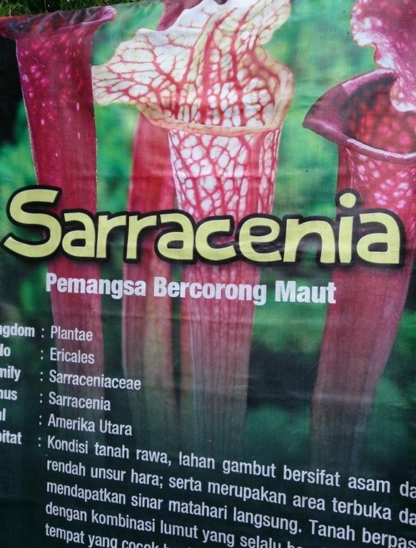 """""""Pemangsa bercorong maut"""". Gak beda sama cowok2 jago sepik sih..."""