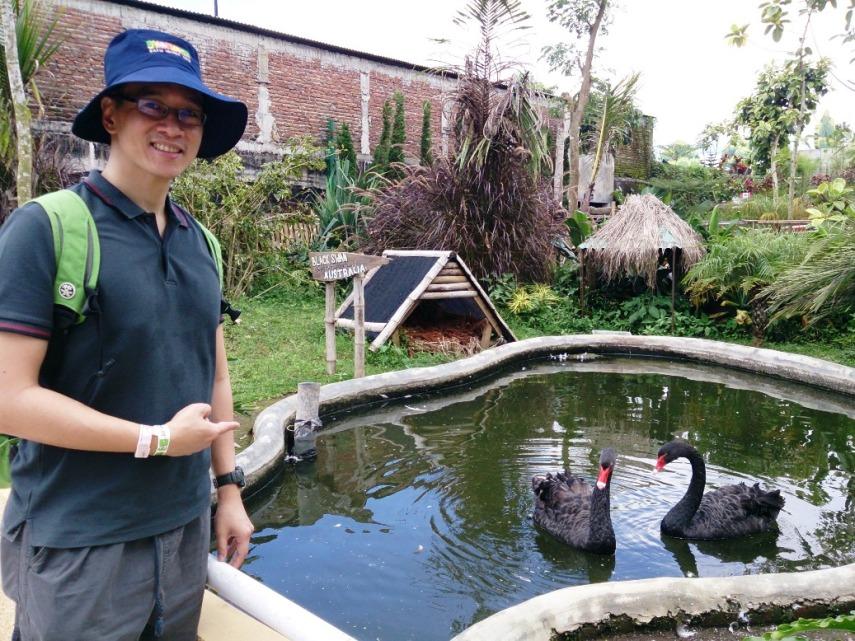 Ketemu Black Swan, angsa hitam asli dari Australia, dan jadi istilah buku terkenal Nassim Taleb 'The Black Swan'