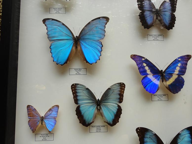 Detail kupu yang cantik2. Ada yang kalo kena cahaya memantulkan begitu....